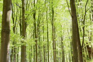 skovens-dag-2014-16